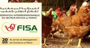 الفيدرلية البيمهنية لقطاع الدواجن تنكر في بلاغ نفوق 20% من الدجاج بفعل موجة الحر (الشركي)