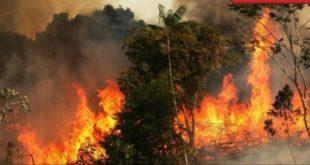 """رئة الأرض تحترق وسط """"تعتيم"""" إعلامي"""