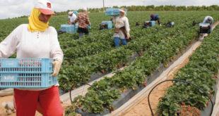 """وزارة التشغيل تكشف عن تشغيل 16500 عاملة بحقول """"ويلبا"""" الإسبانية"""