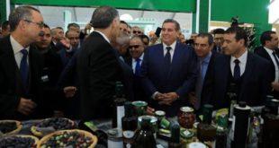 أخنوش: المغرب حقق نتائج مهمة في مجال تثمين شجرة الزيتون