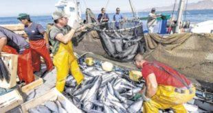 """مجلس المنافسة : """"أليوتيس"""" فشل في تحقيق أهدافه المرتبطة بأسواق السمك"""