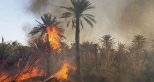 تزنيت..الدرك يضع يده على المتسببين في حريق واحة النخيل بجماعة (أوفلا إغير)